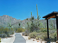 Desert Discovery Trail