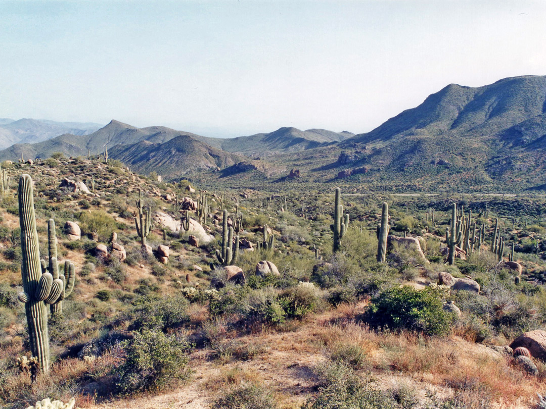 Cacti on the hills to the west