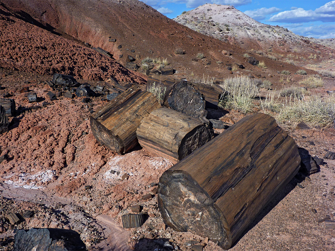 Petrified Forest National Park Holbrook Arizona