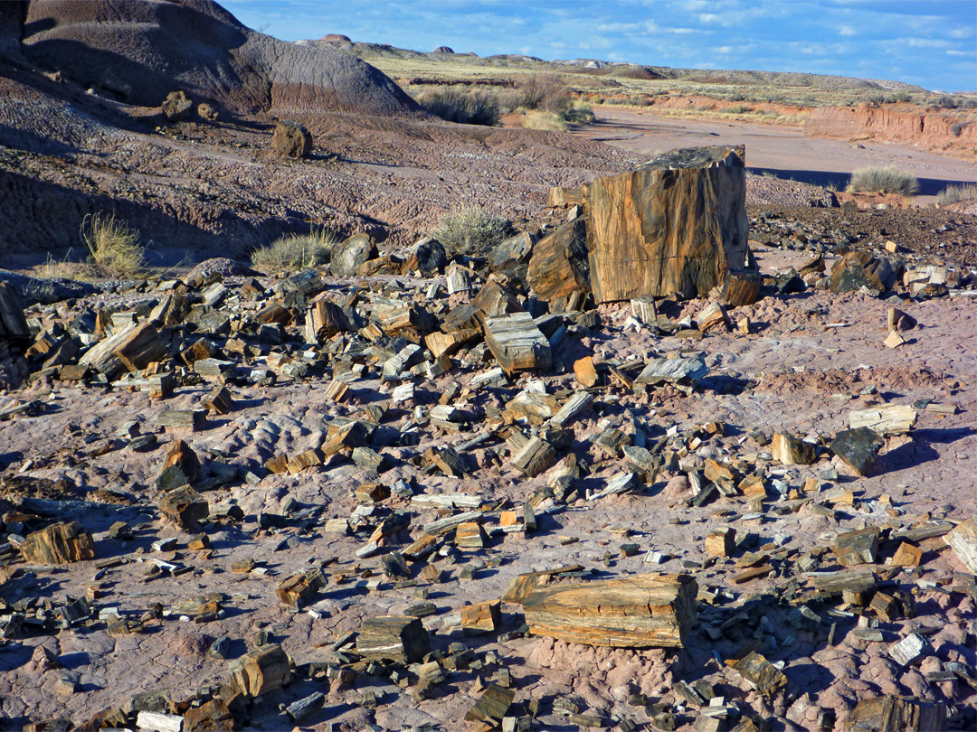 petrified forest natl pk black dating site Petrified forest national park, covering 216 square miles, is known best as one of the largest collections on earth of these petrified logs however, it also has a wealth of other fossils more than 250 fossil sites have been documented in the park.