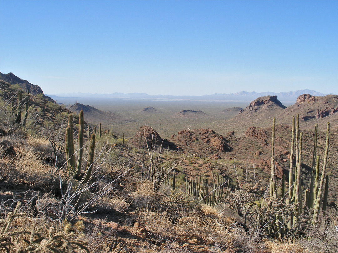 Cacti at Bull Pasture