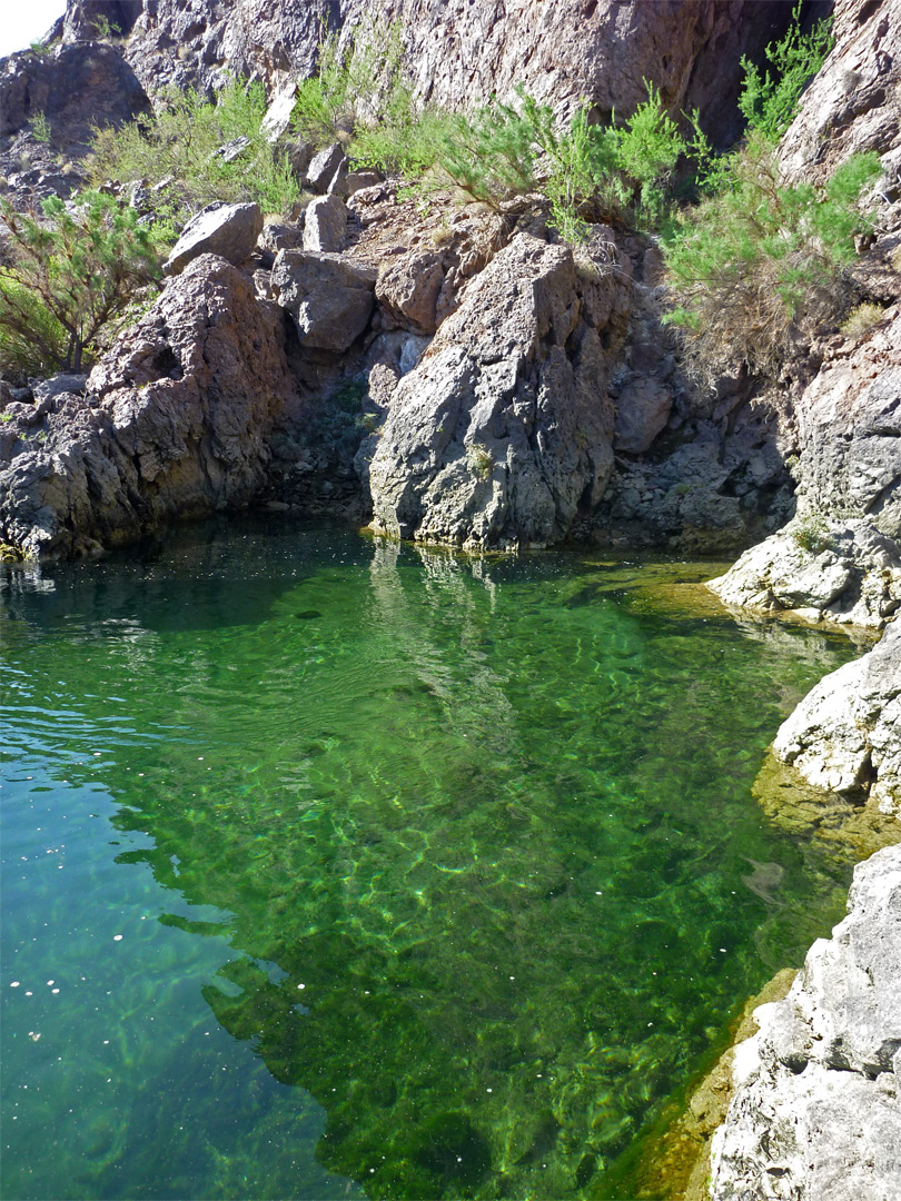 Greenish water