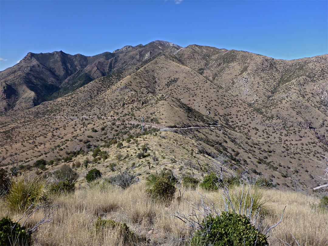 The Huachuca Mountains