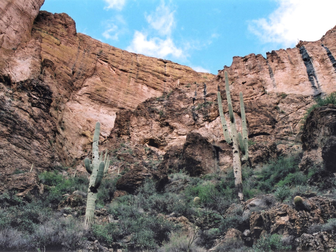 Cliffs with saguaro