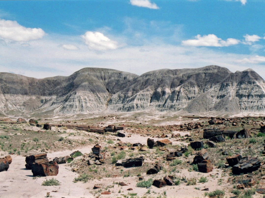 Grey Badlands Petrified Forest National Park Arizona