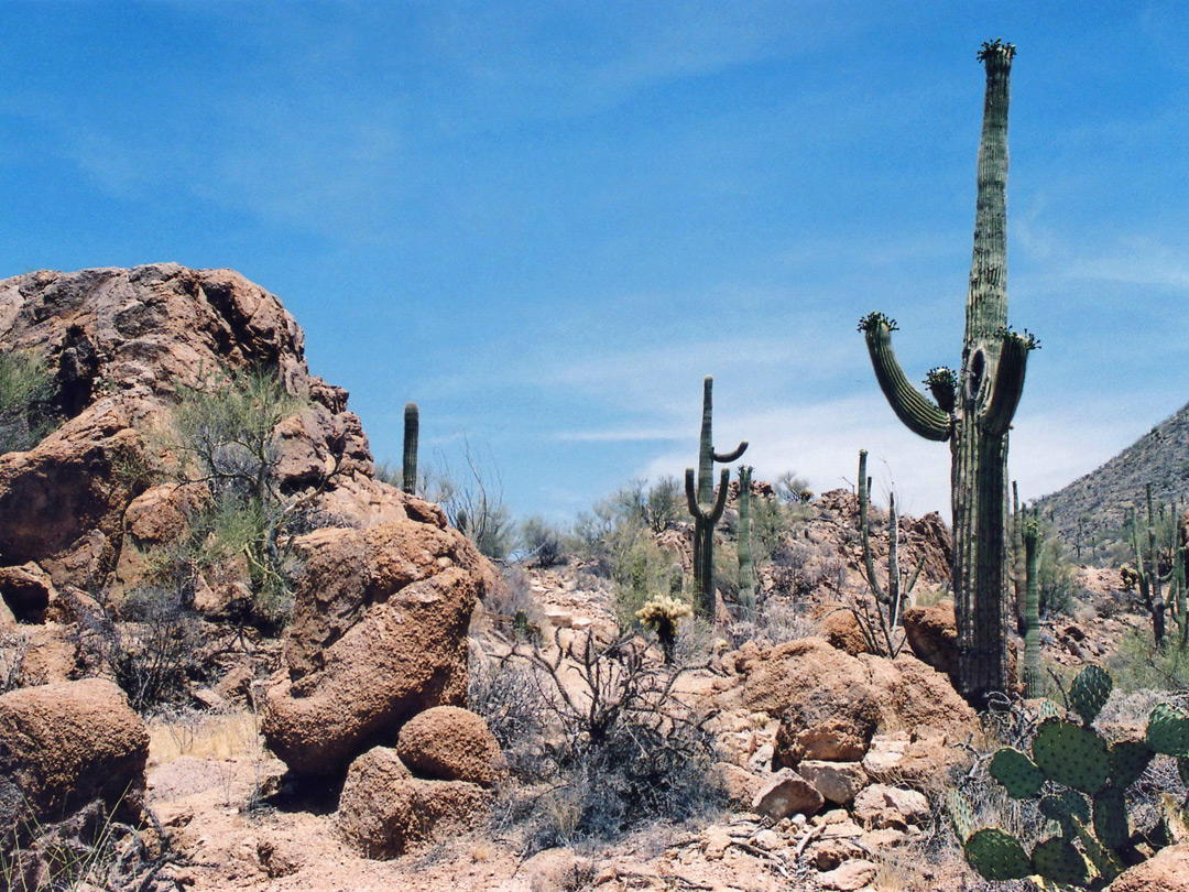 Rocks and saguaro