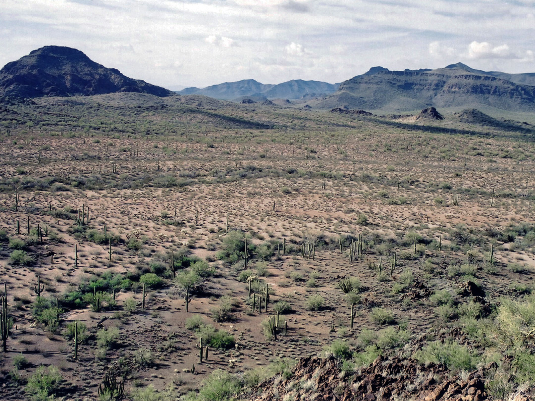 Wide view over the desert
