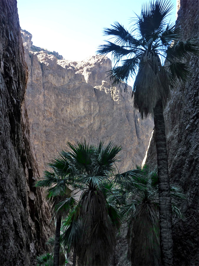 Palms in the side canyon