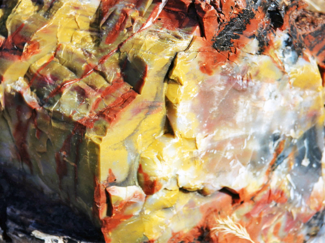 Yellow-red petrified wood