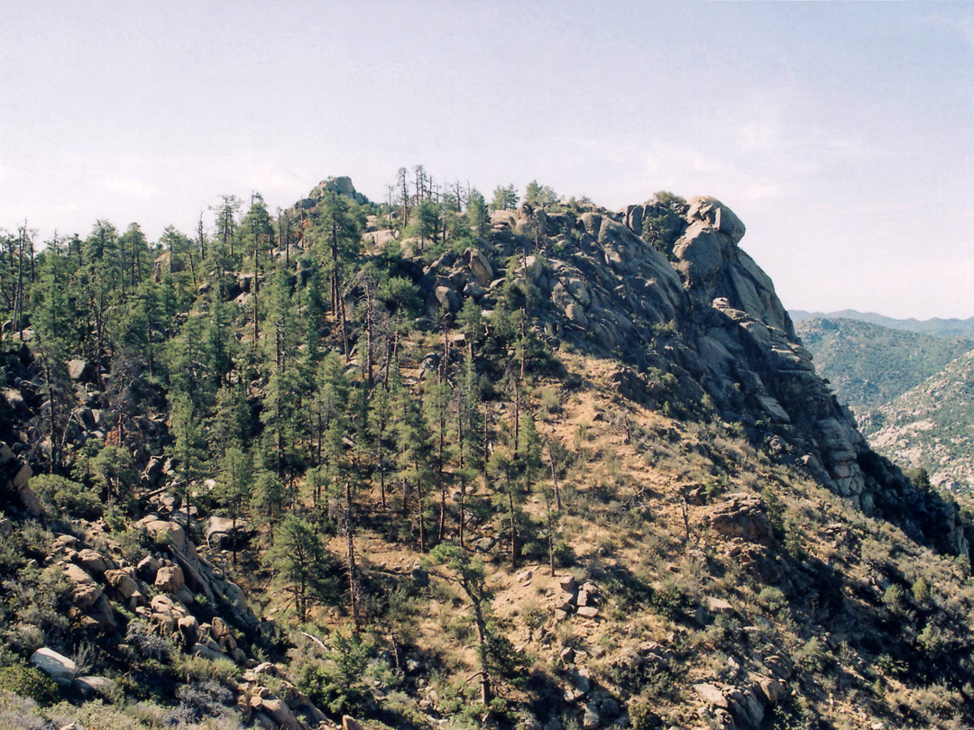 Forested ridge