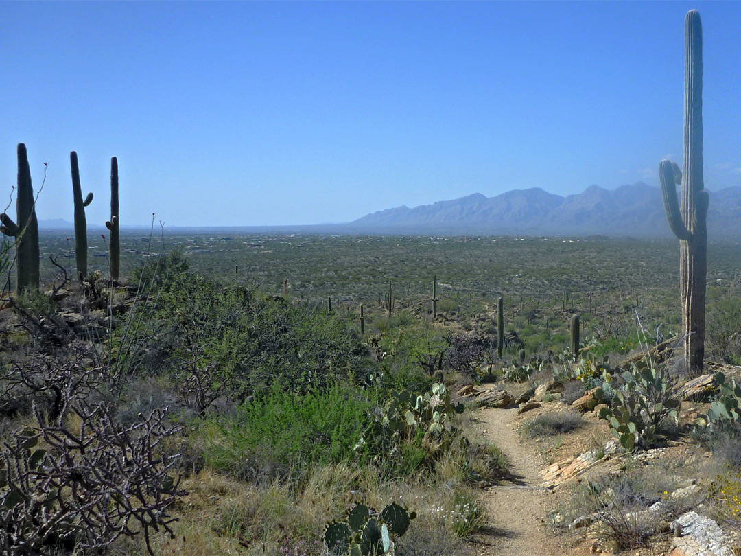 West end of Tanque Verde Ridge