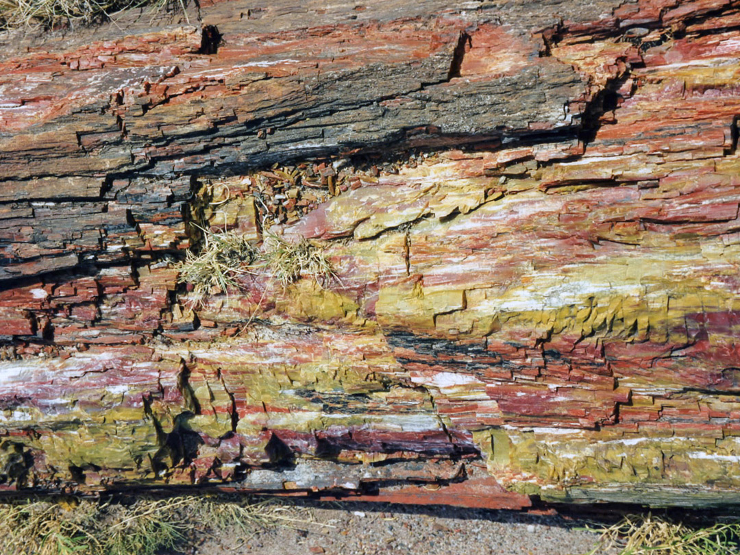 Weathered petrified wood