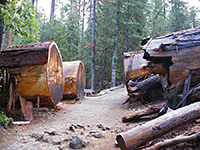Outer Loop (Mariposa Grove)