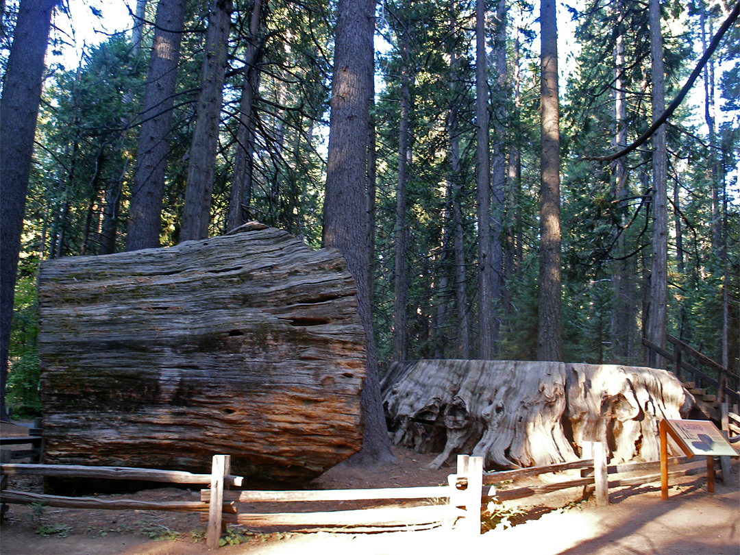 Big Stump, and log