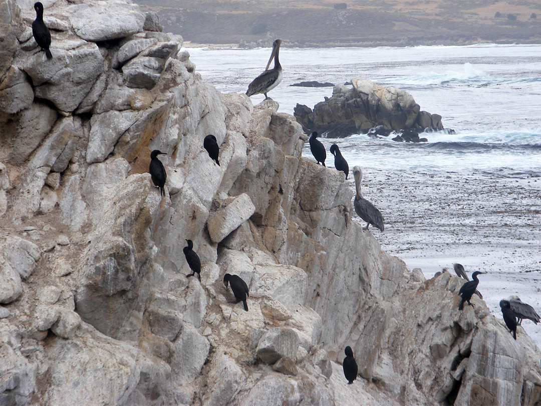 Birds on Guillemot Island