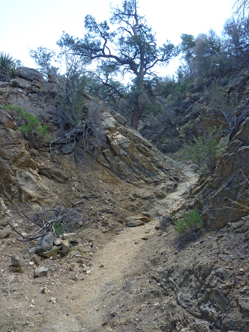 Bend in a narrow ravine: Panorama Trail, Joshua Tree National Park ...