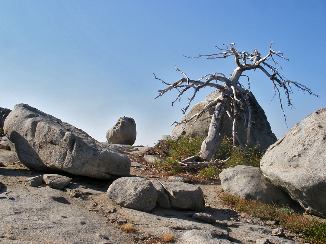 Dead tree and granite boulders