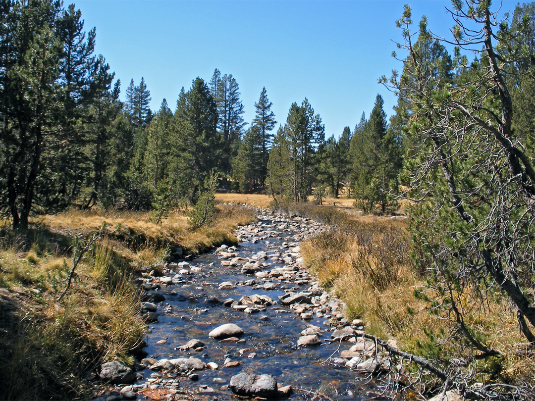 Stream through Dana Meadows