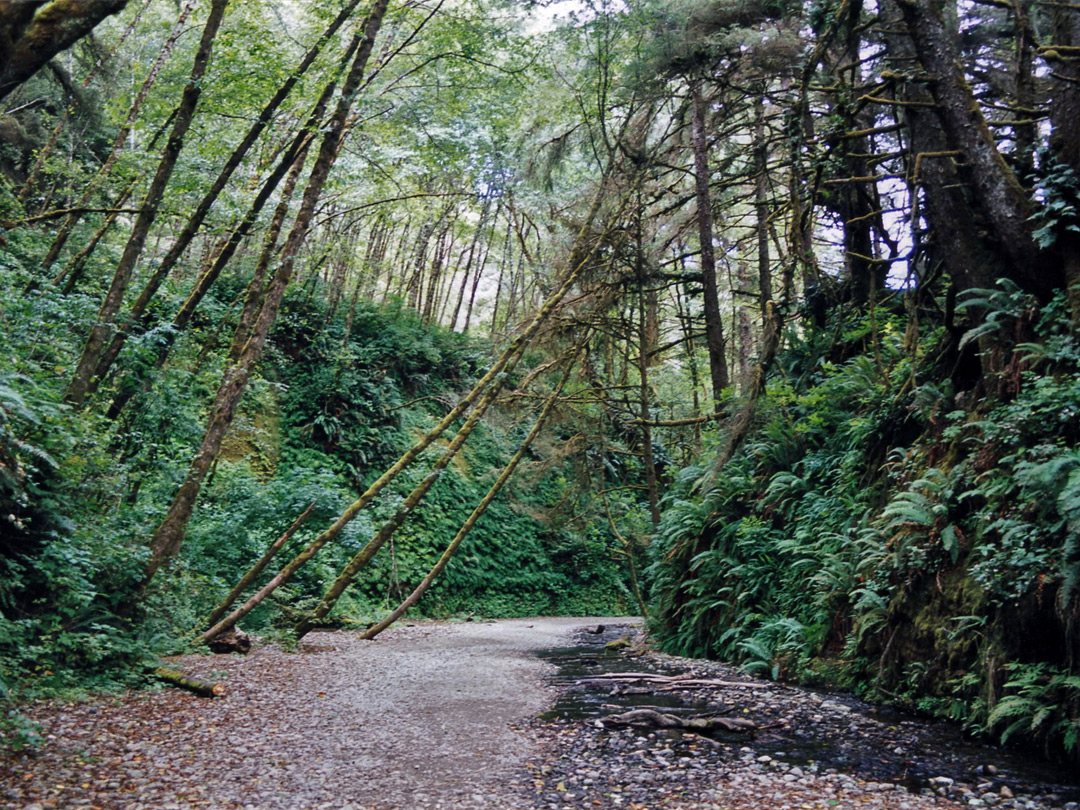 Entrance to Fern Canyon