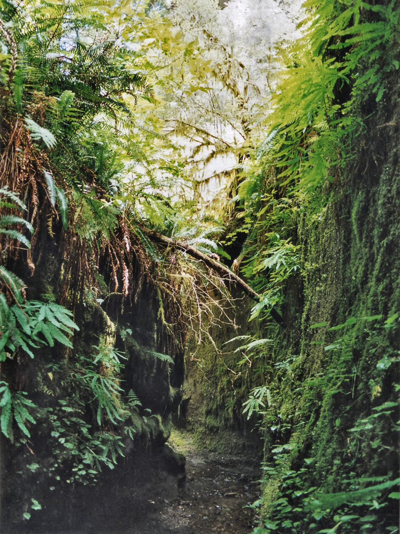 Tributary of Fern Canyon