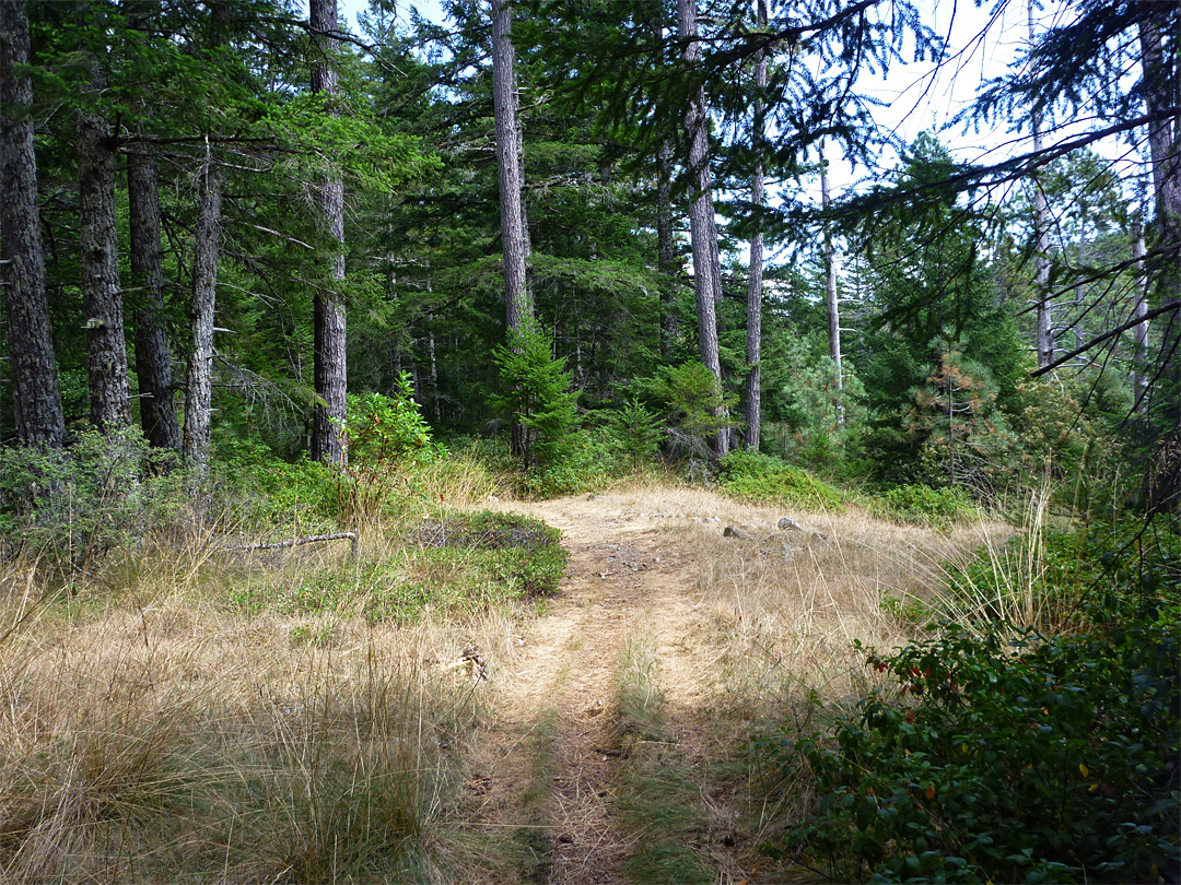 Open area in the forest