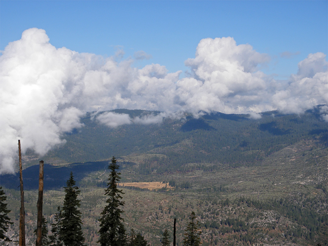 Foresta and Big Meadow