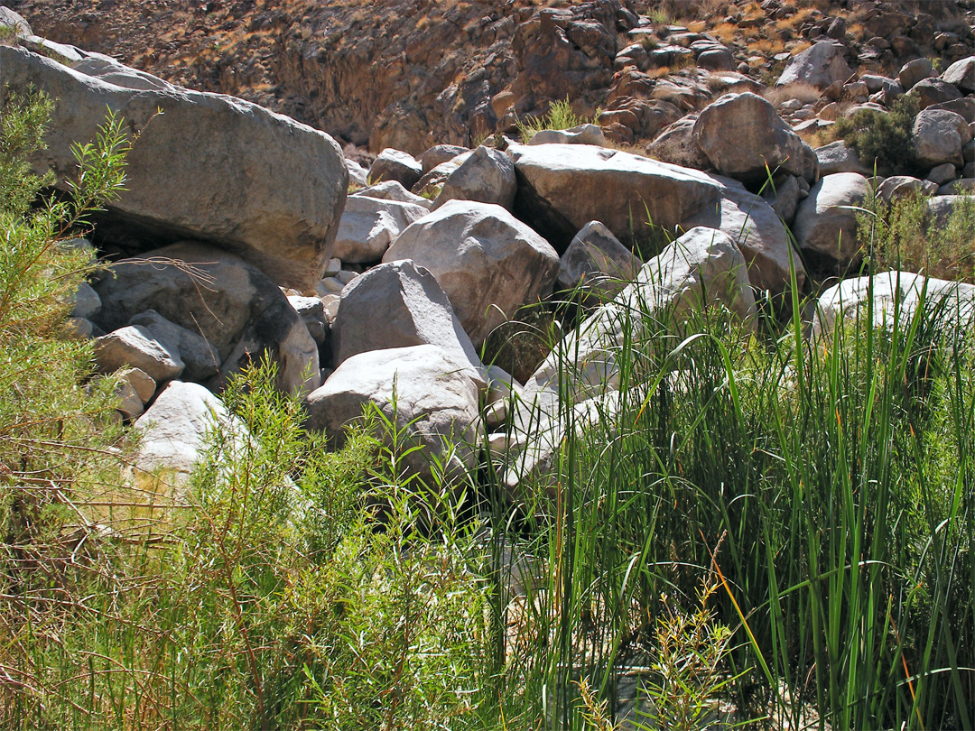Reeds and boulders