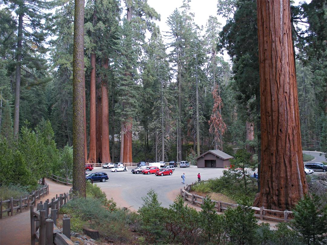 Grant Grove, Kings Canyon National Park, California