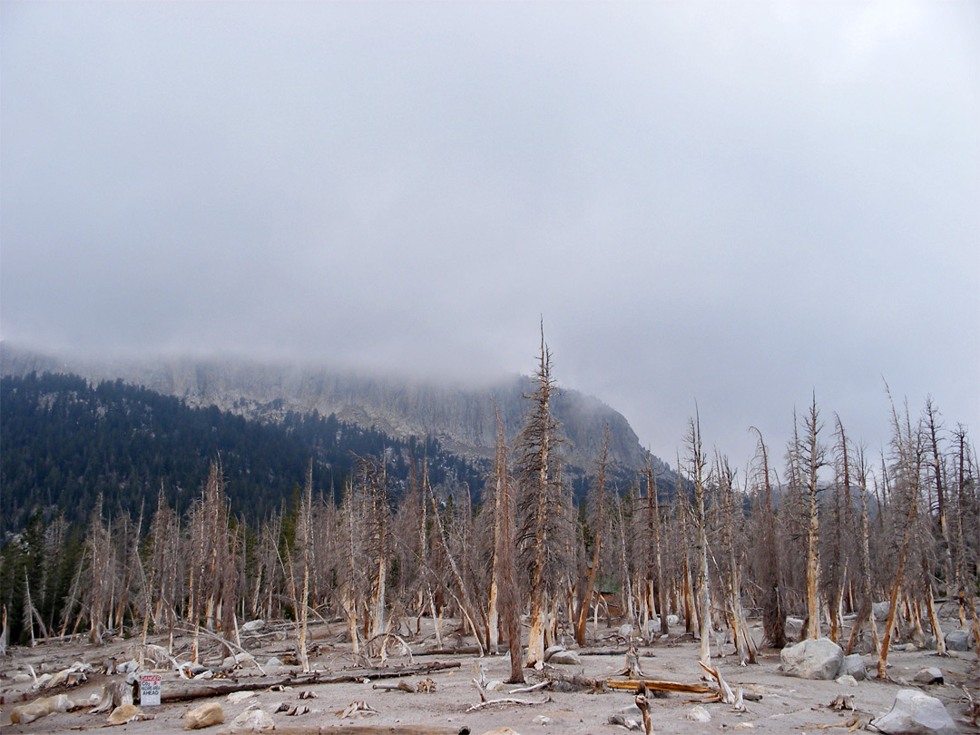 Dead trees by Horseshoe Lake