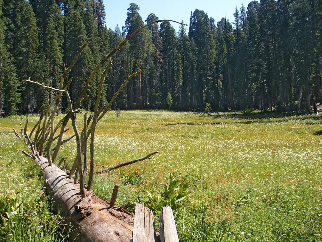 Huckleberry Meadow