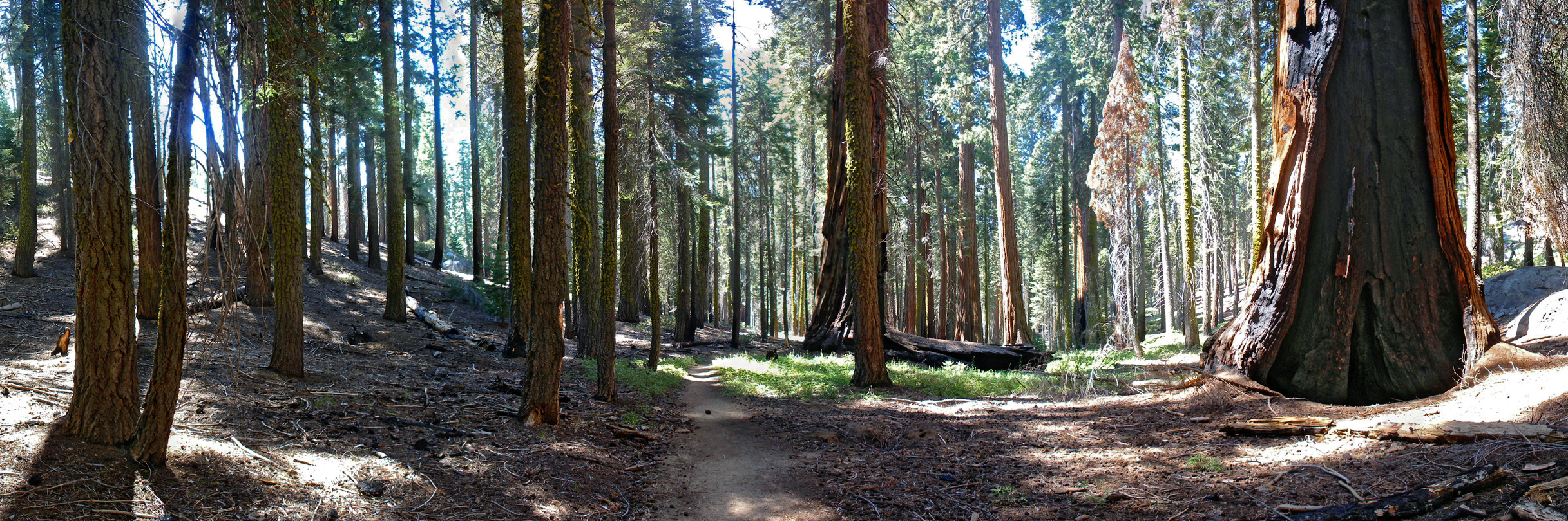 Typical view along the Huckleberry Trail