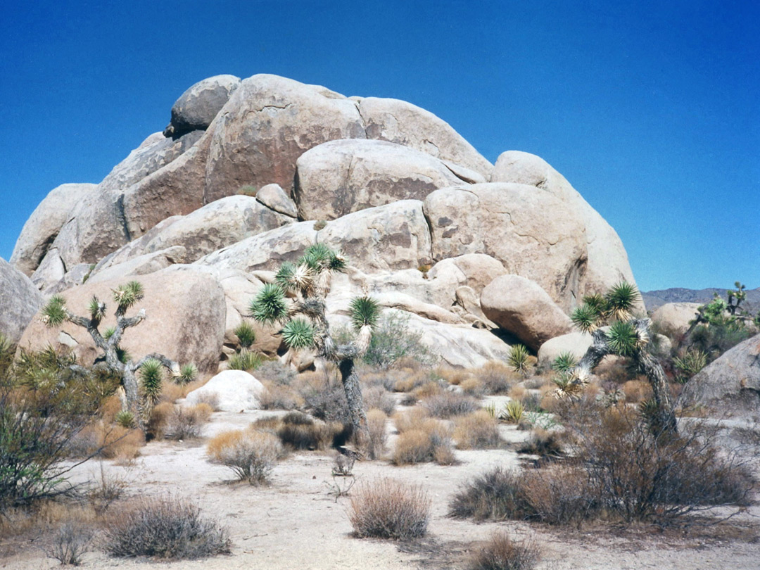 Rocks and Joshua trees