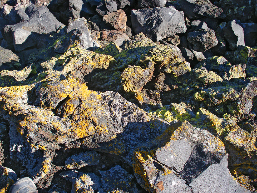 Yellow lichen on lava