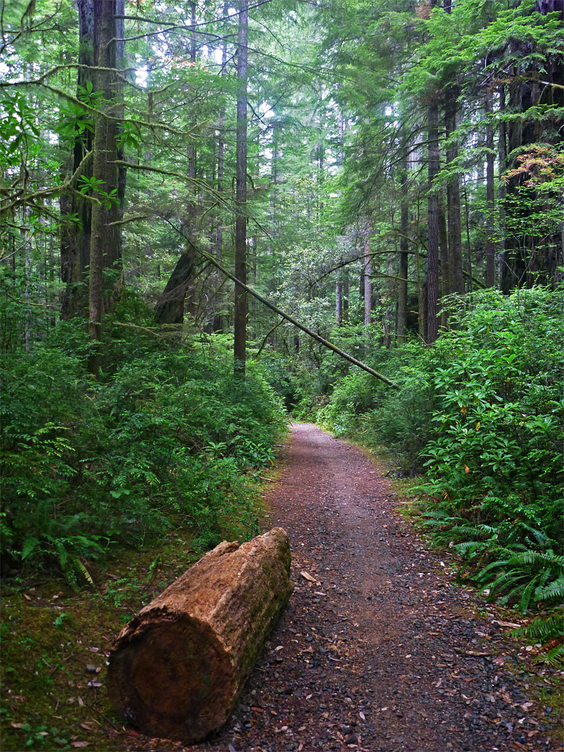 Lake Tahoe Hotels >> Little Bald Hills Trail, Jedediah Smith Redwoods State ...