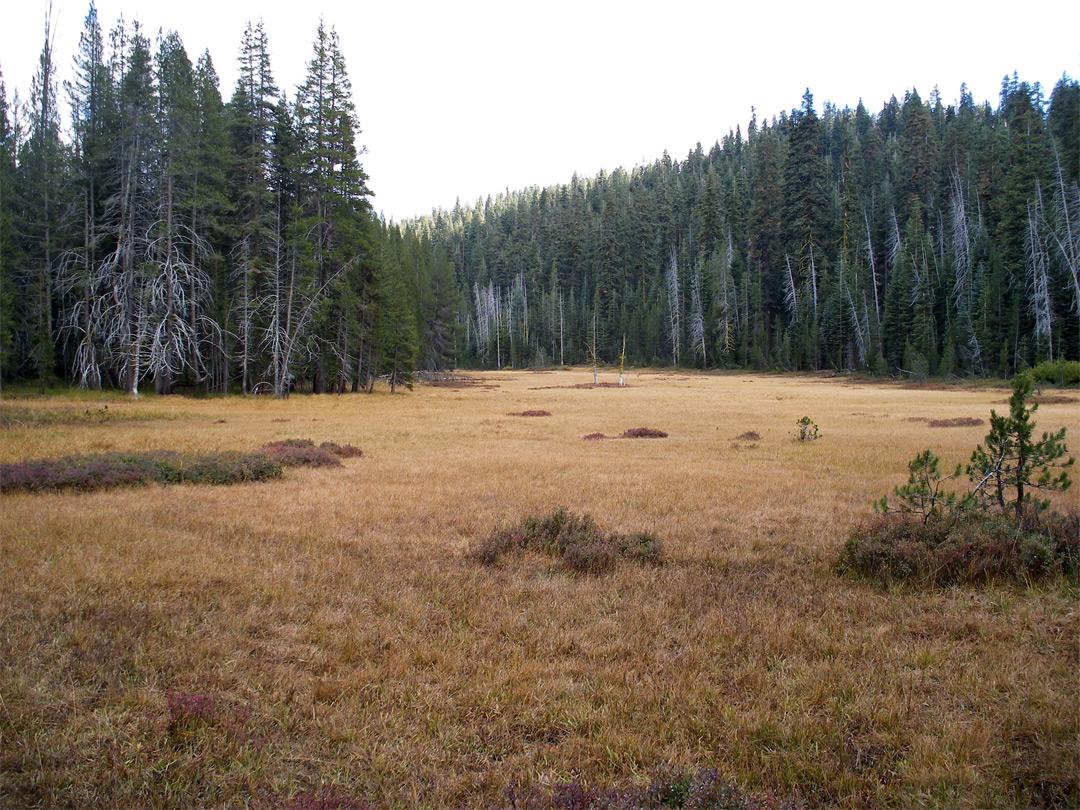Mono Meadow Trail, Yosemite National Park, California