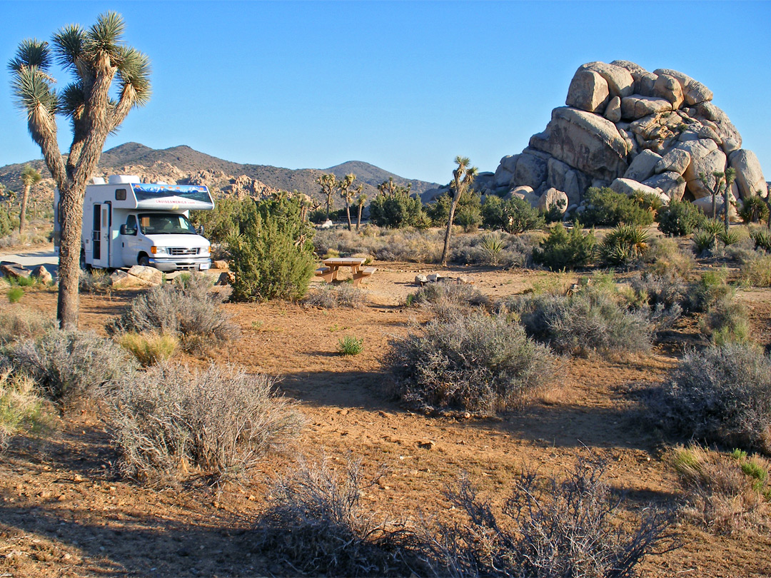 Camping In Joshua Tree Survival Life