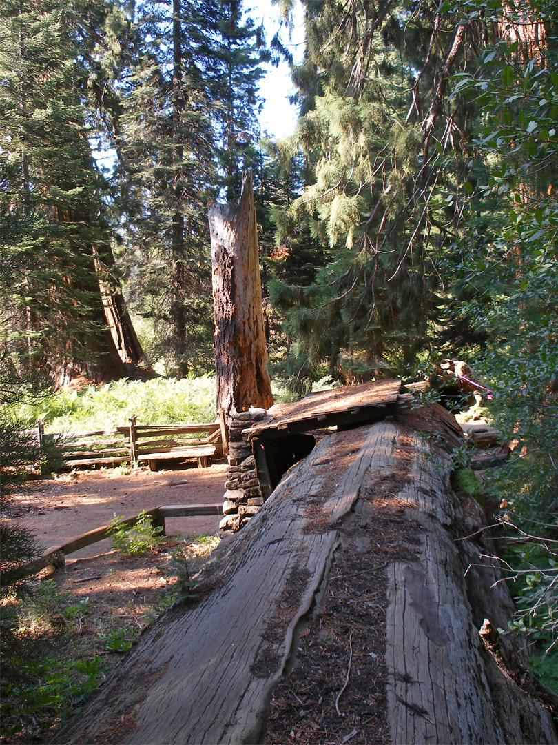 Top of tharps log log meadow trail sequoia national park for Log cabin sequoia national park