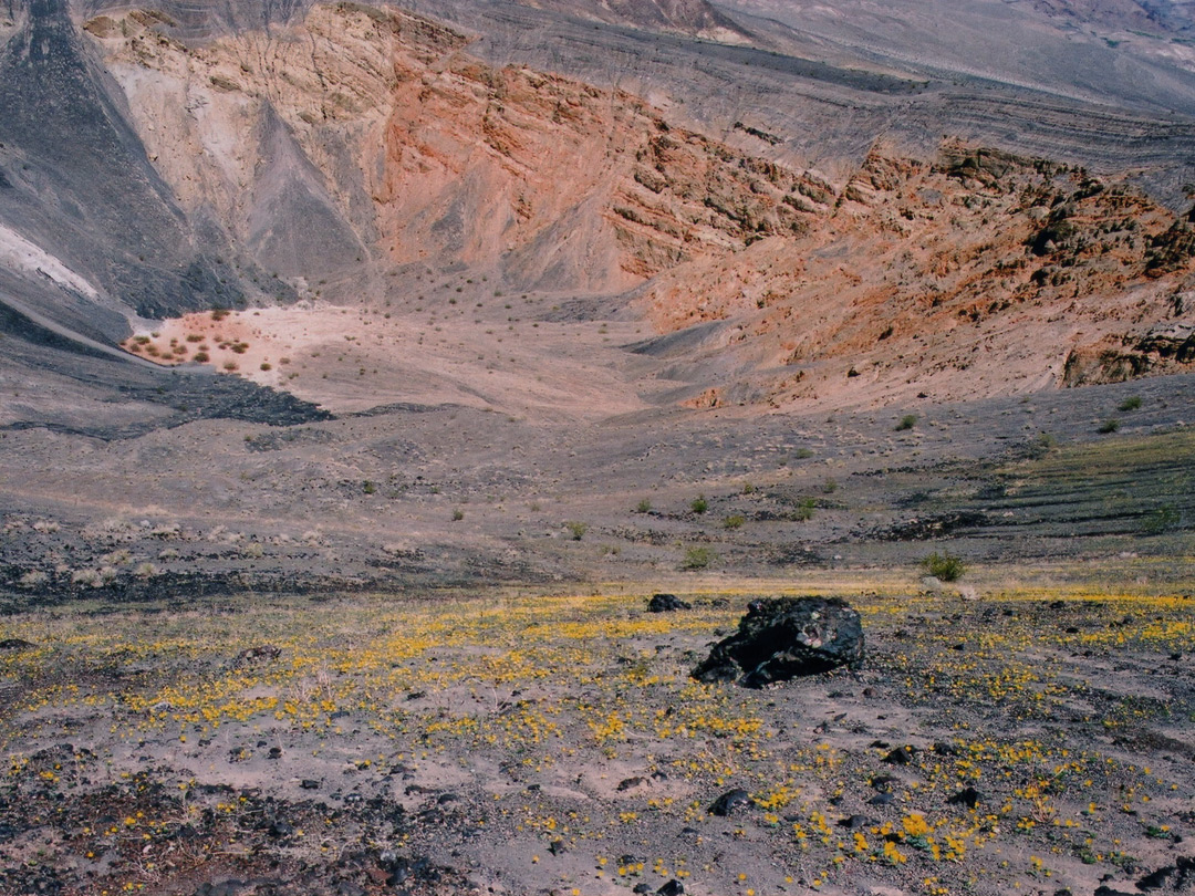 Wildflowers above the crater