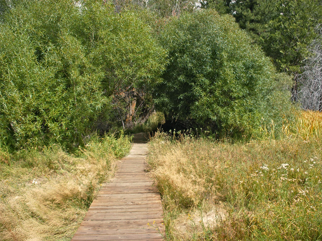 Boardwalk trail across the meadow