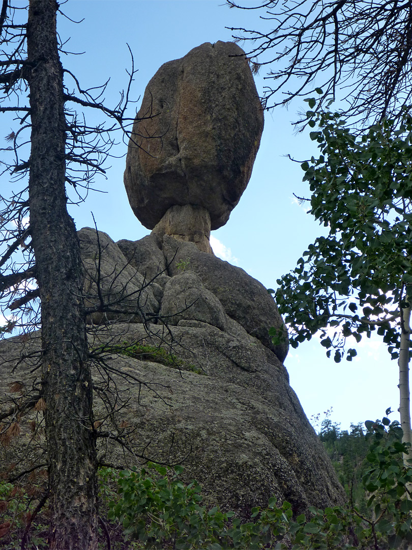 Tree beside Balanced Rock
