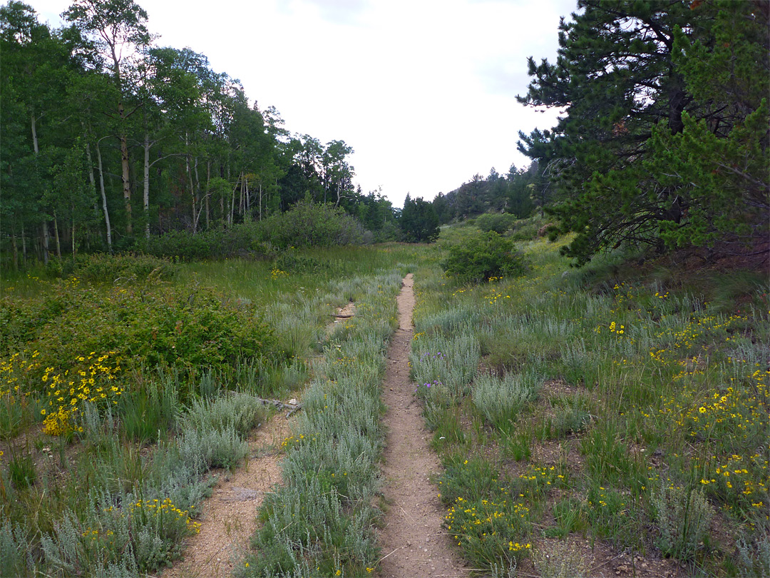 Old vehicle track: Mosca Pass Trail, Great Sand Dunes National Park ...