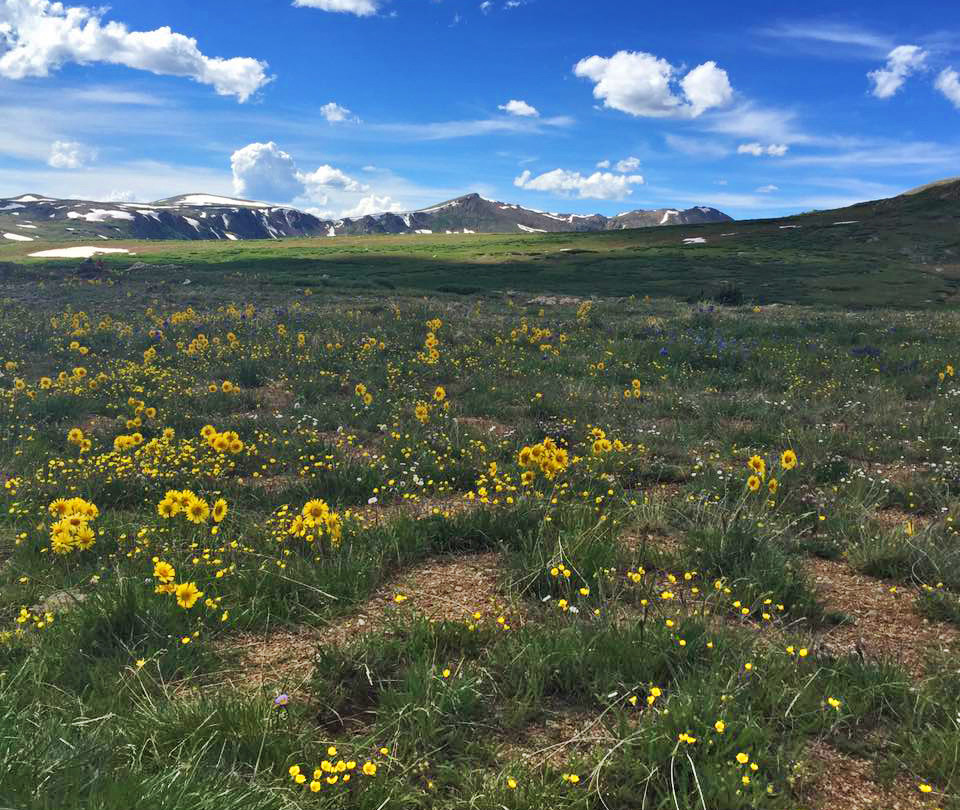 Wildflowers at the pass