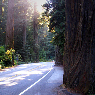 Jedediah Smith Redwoods State Park