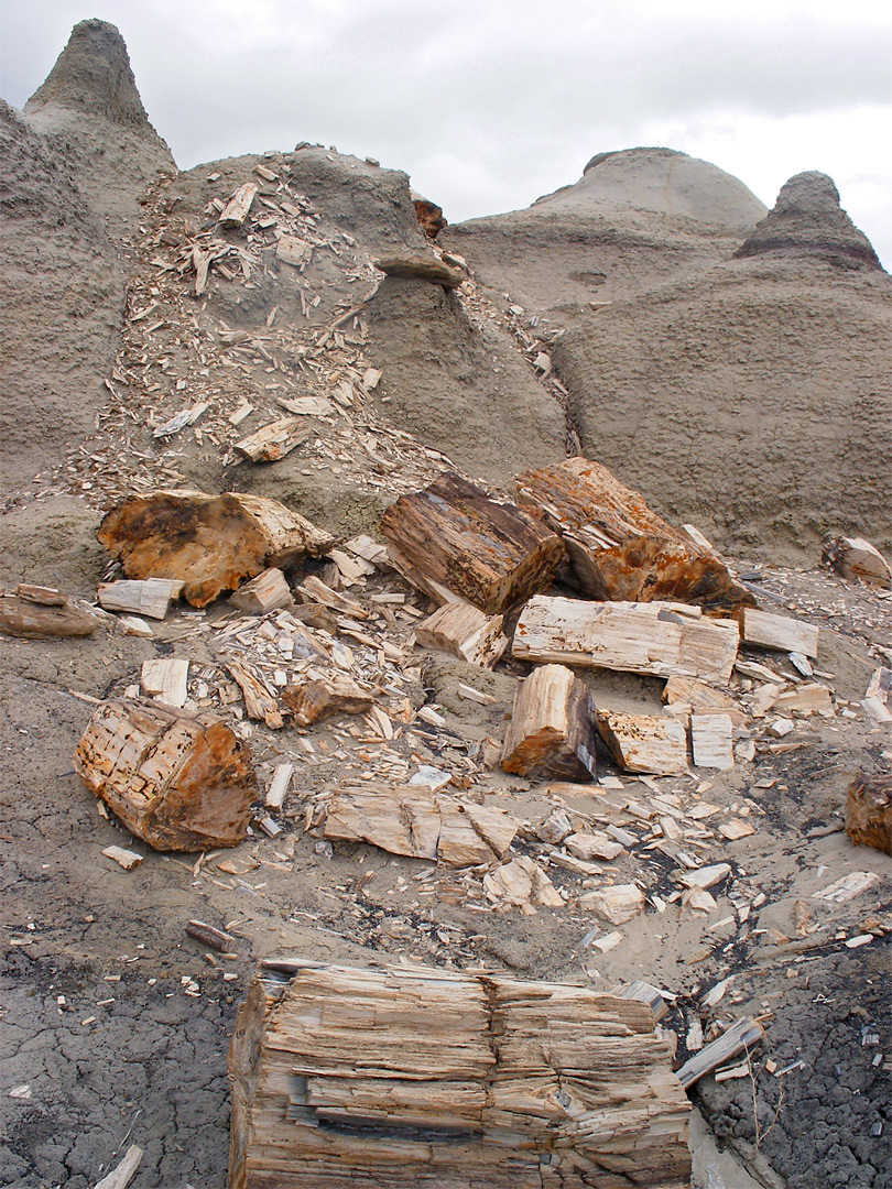 Crumbling petrified wood