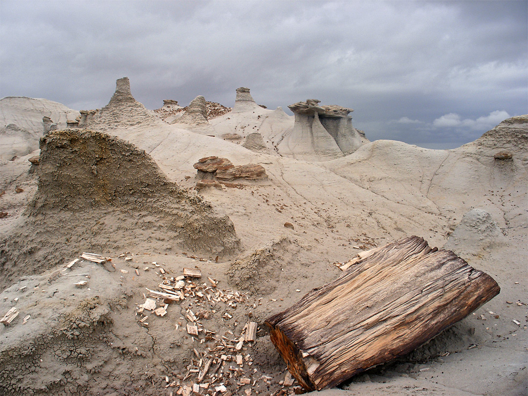 Petrified log and hoodoos