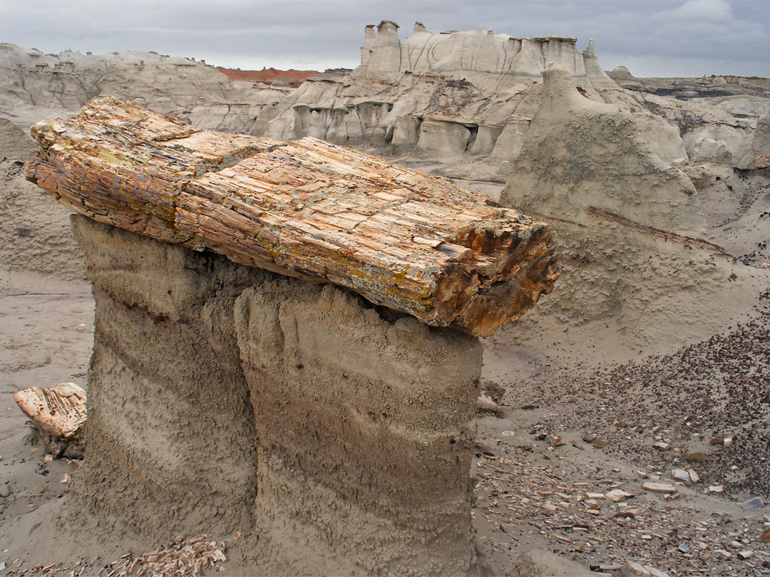 Petrified log hoodoo