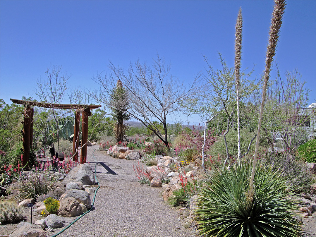 Cactus garden Oliver Lee Memorial State Park New Mexico