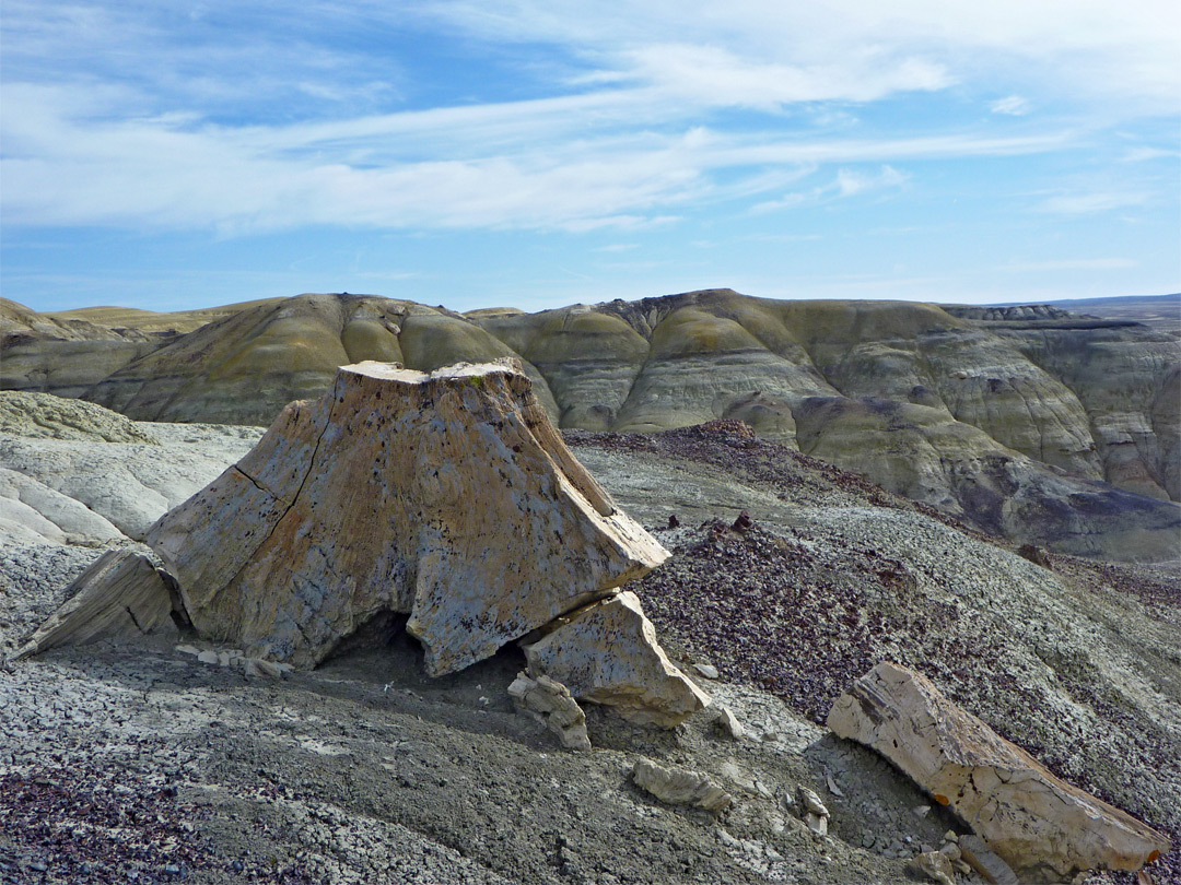 Petrified stump and yellow badlands