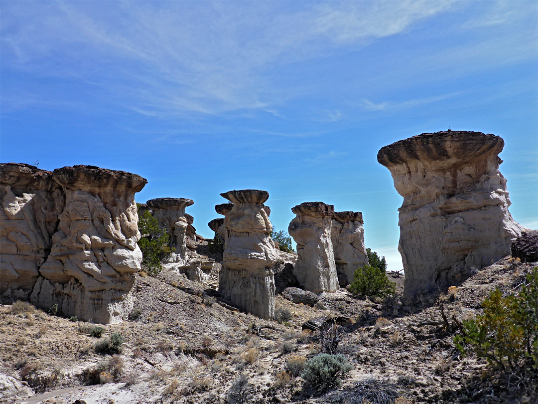 Bushes and hoodoos