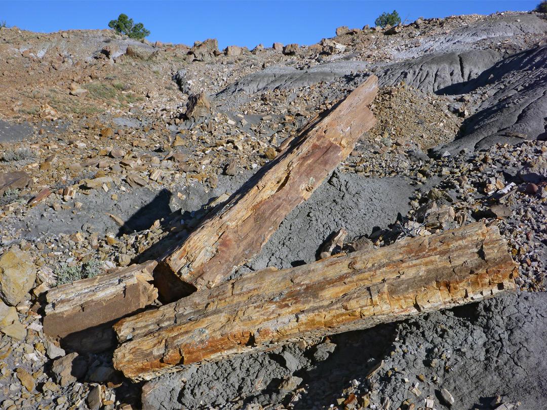 Split Petrified Log Penistaja Mesa New Mexico